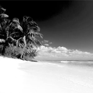Foto 14 Palmbomen