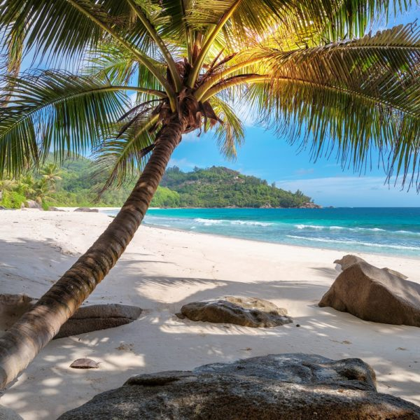 fotobehang palmboom zee strand