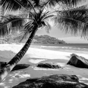 Foto 10 Palmbomen