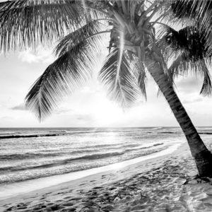 Foto 11 Palmbomen