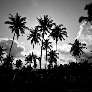 Foto 13 Palmbomen