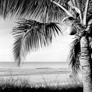 Foto 12 Palmbomen