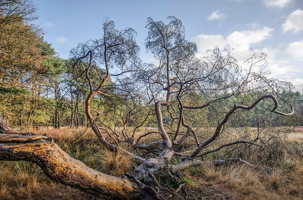 Het Noordlaarderbos in Groningen op fotobehang