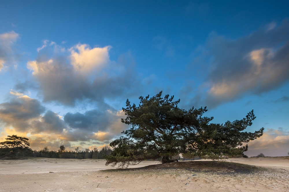 Nationaal Park Drents-Friese Wold in Friesland