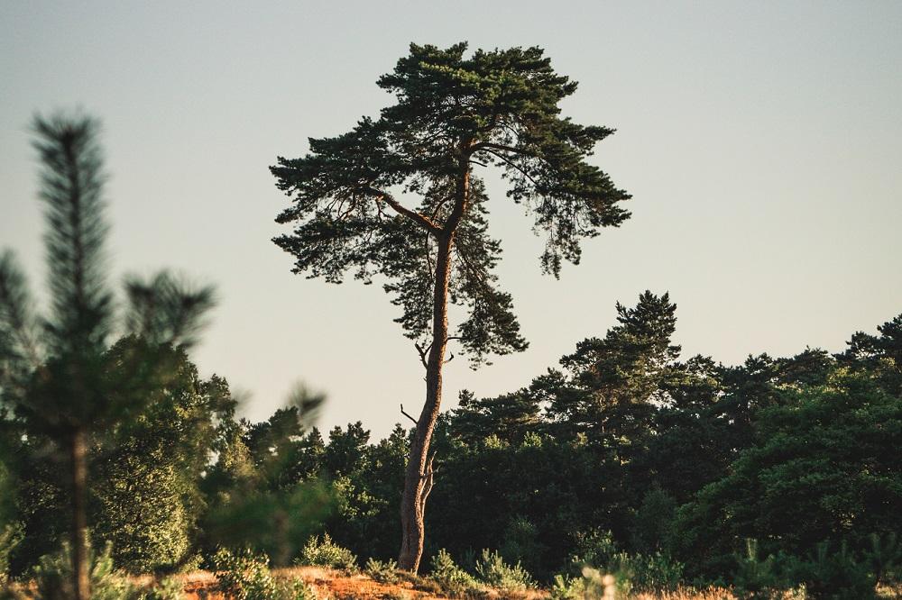 Nationaal Park Utrechtse Heuvelrug voor fotobehang