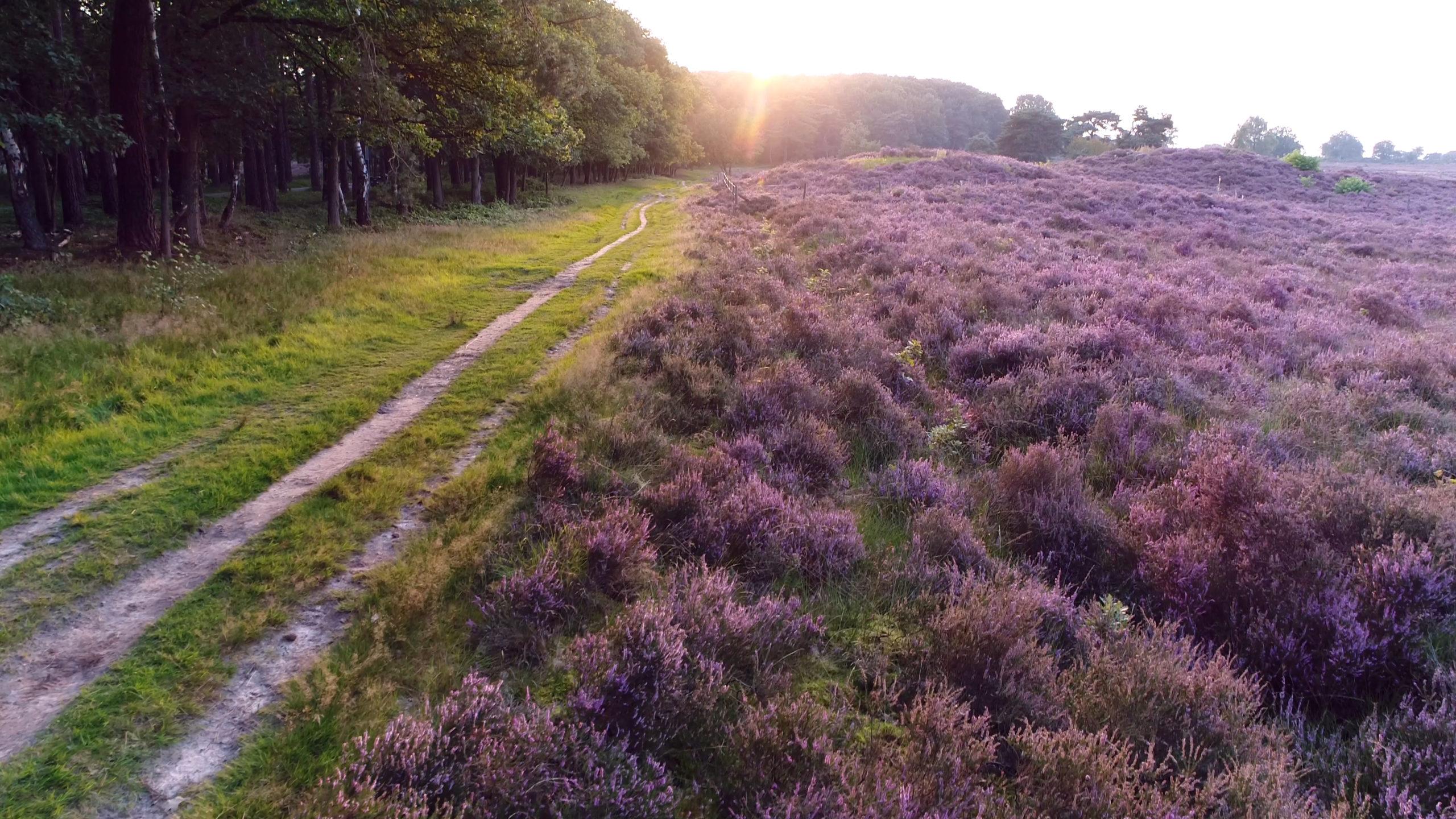 Blog: 12x de mooiste bossen van Nederland