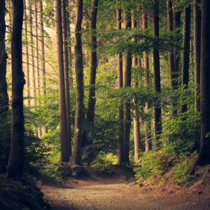 bos met bomen zonlicht endless view