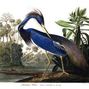 Foto 6 Bird