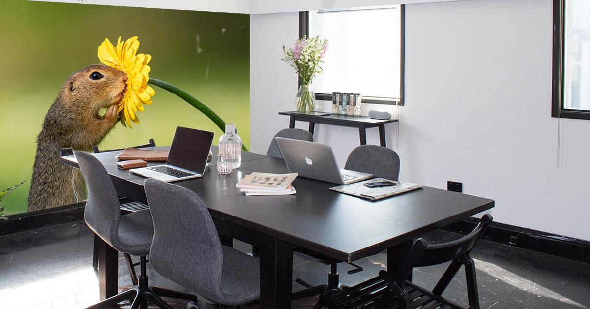 kantoor dick van duijn natuurfoto grondeekhoorn