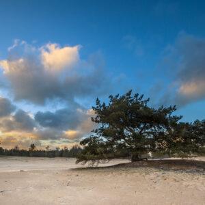 Foto 26 Strand Zee Duinen