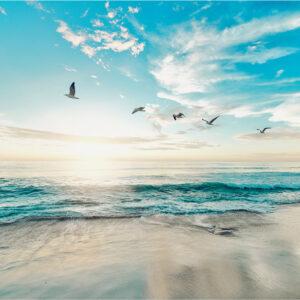 Foto 24 Strand Zee Duinen