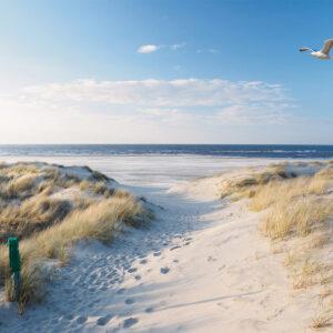 Foto 30 Strand Zee Duinen