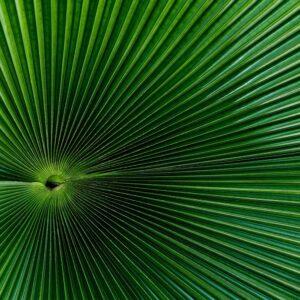 Foto 29 Planten - Bladeren