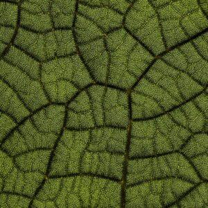 Foto 27 Planten - Bladeren