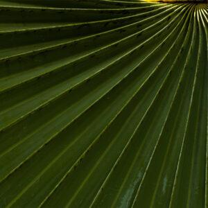 Foto 16 Planten - Bladeren