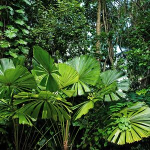 Foto 12 Jungle