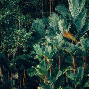 Foto 24 Jungle