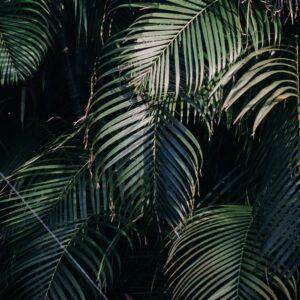 Foto 23 Jungle