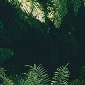 Foto 22 Jungle