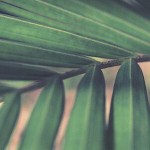 Foto 26 Planten - Bladeren