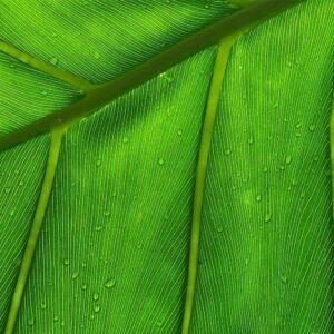 Foto 25 Planten - Bladeren