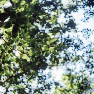 Foto 24 Planten - Bladeren