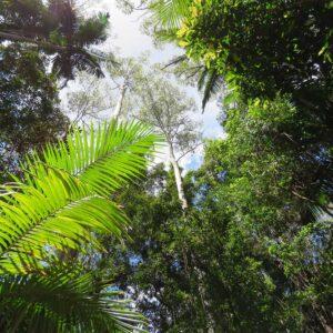 Foto 21 Jungle