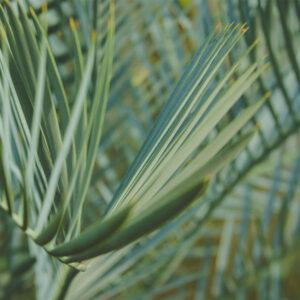 Foto 18 Planten - Bladeren