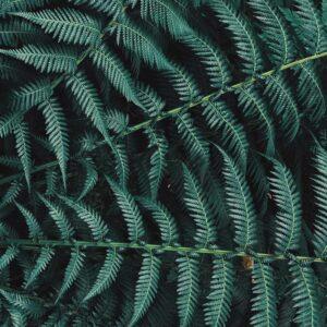 Foto 17 Planten - Bladeren