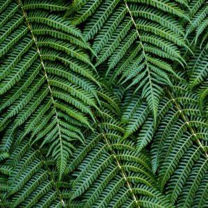 Foto 15 Planten - Bladeren