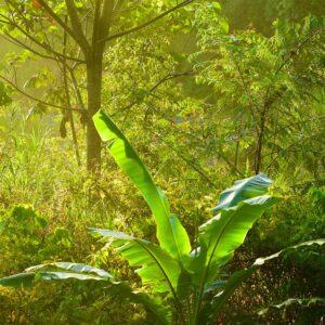 Foto 20 Jungle