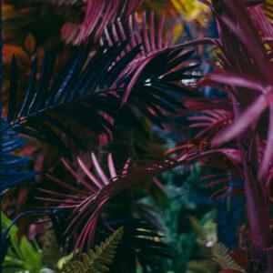 Foto 19 Jungle