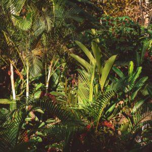 Foto 17 Jungle