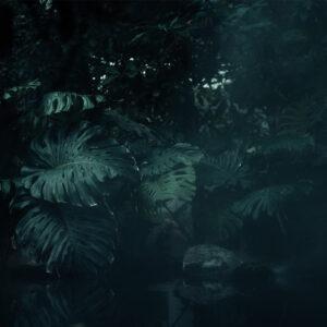 Foto 15 Jungle