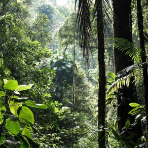 Foto 14 Jungle