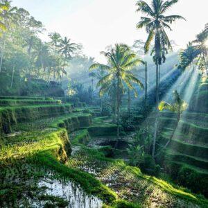 Foto 11 Jungle