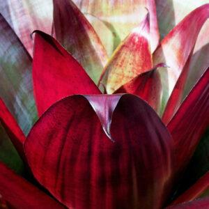 Foto 13 Planten - Bladeren