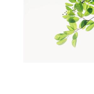 Foto 12 Planten - Bladeren