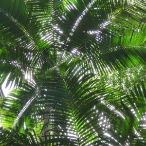 Foto 8 Jungle