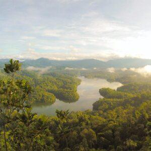 Foto 6 Jungle