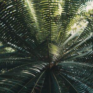 Foto 11 Planten - Bladeren