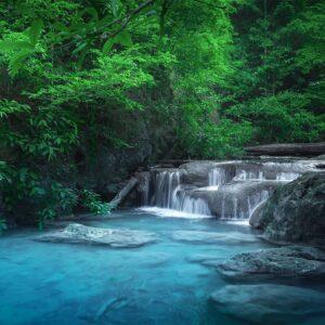 Foto 3 Jungle