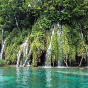 Foto 2 Jungle
