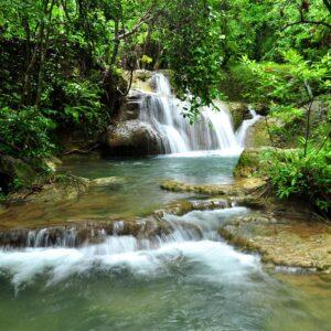 Foto 1 Jungle