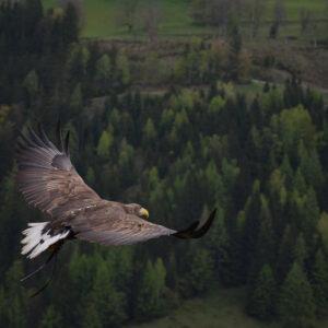 Foto 32 Vogels
