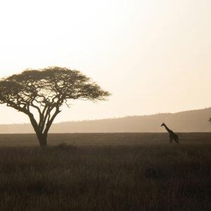 Foto 1 Afrika