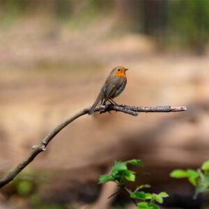 Foto 31 Vogels