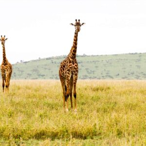 Foto 25 Afrika