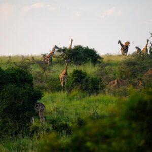 Foto 2 Afrika