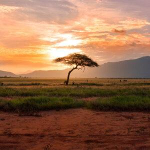 Foto 6 Afrika